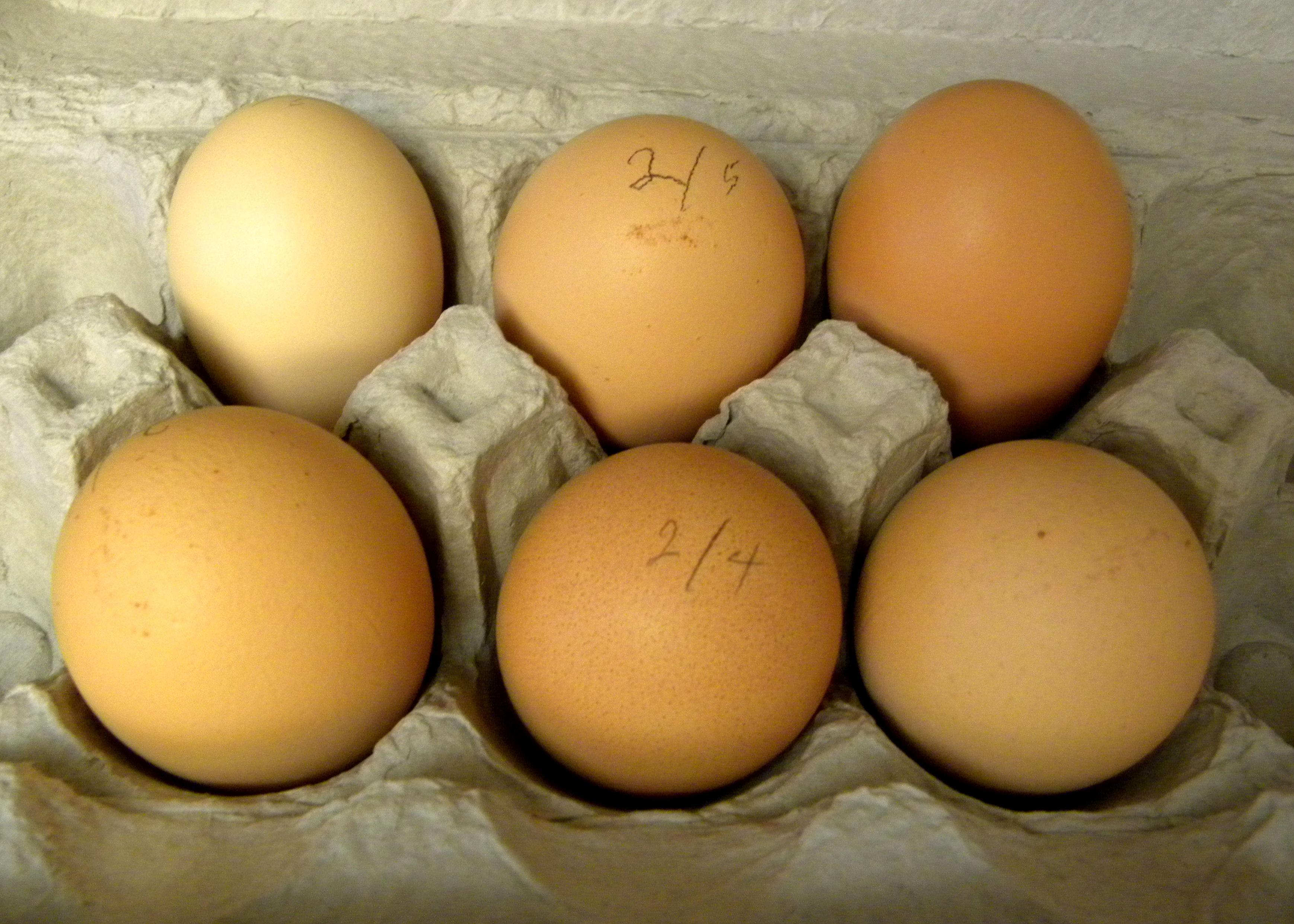 Salton Egg Cooker ~ Harvest monday feb lou murray s green world