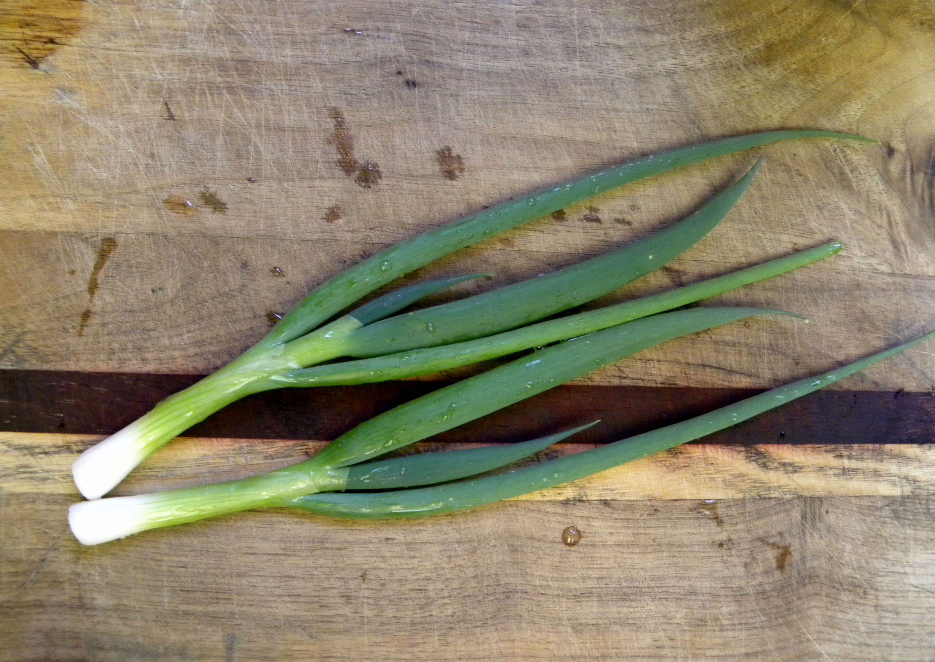 The gallery for --> Sliced Green Onions