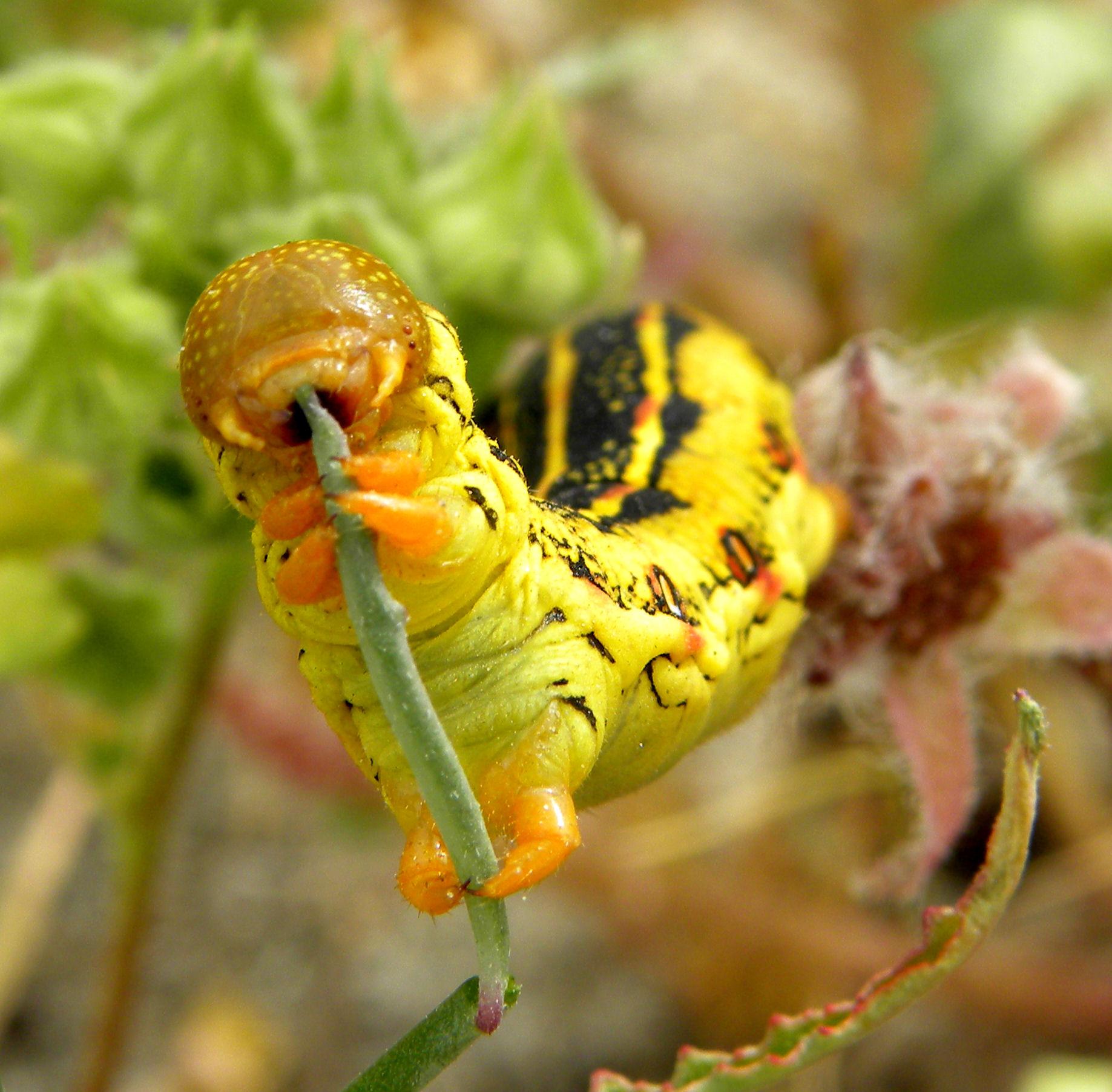 Photographs Of Caterpillars New Ideas Items