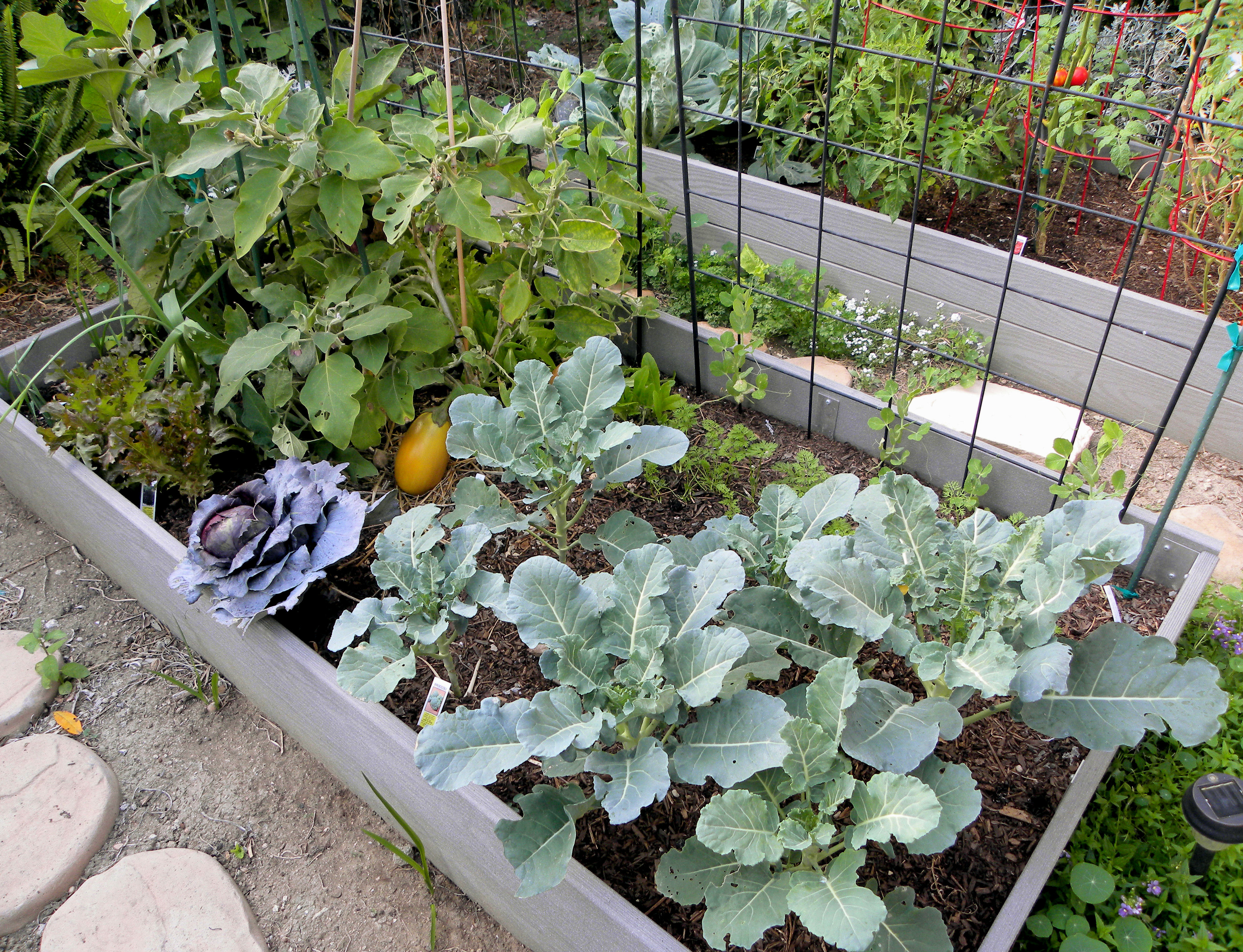 harvest monday and fall planting in my backyard garden lou murray 39 s