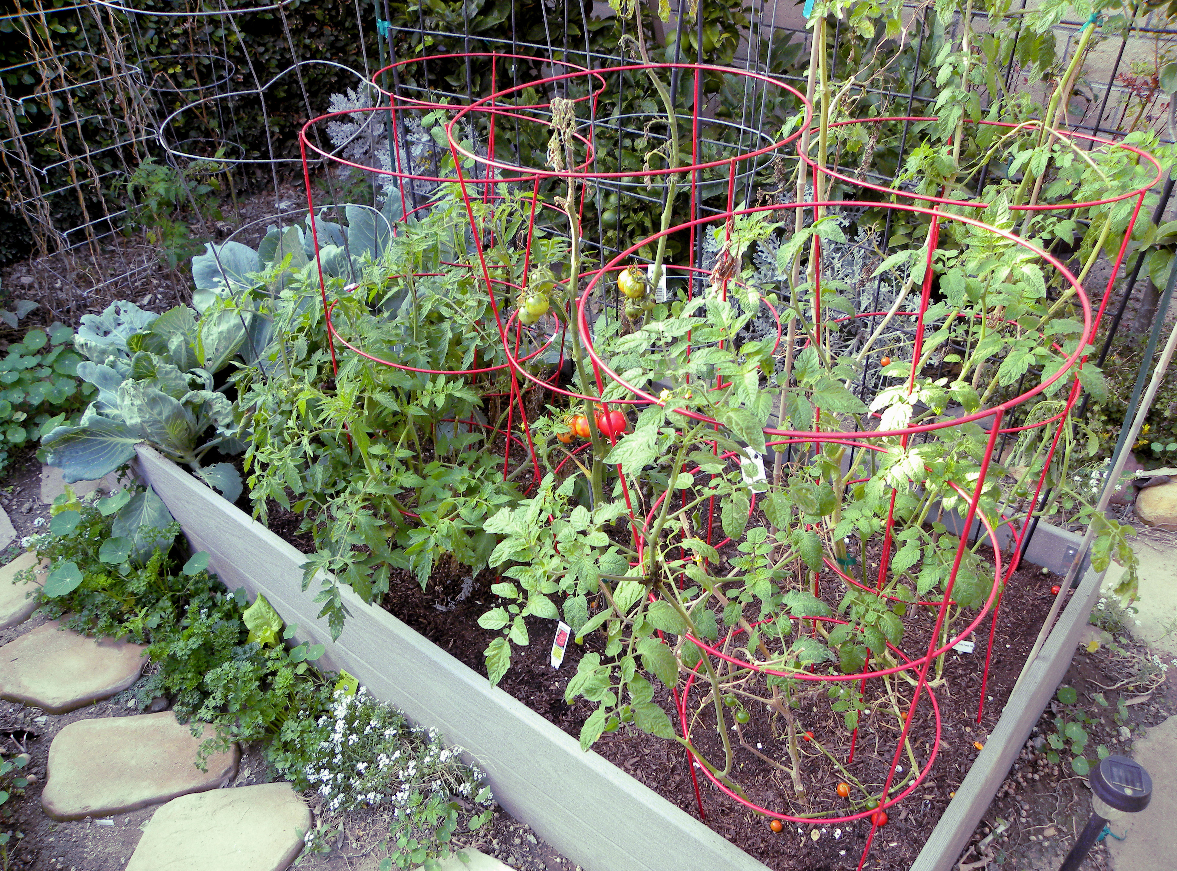 garden design garden design with how to plant tomatoes in raised