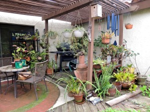 I filled the deck with plants. I wanted to be surrounded by LIFE. But my plants rotted the deck.