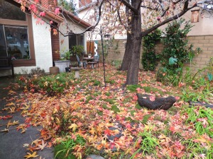 Our front yard with MORE fallen leaves. It seems like there is no end to the leaves. I bag them and compost them over the course of a year. Garden gold.