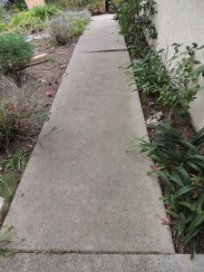 The neighbor's huge cypress trees are gone and so is the sidewalk that the tree roots cracked. This is our new sidewalk on the south side of the house.