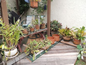 I used my new cordless rotary saw, cordless drill and electric sander to build a little plant stand using scrap lumber from the new neighbor's home renovation project. The one on the right has little legs to keep my plants off the new deck so they won't rot it out. I still have to build the one on the left and then paint them both. Power tools are fun.