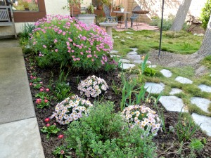 I planted some perennial flowers along the front walkway.