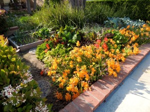 The Garden of Infinite Neglect is in full bloom with a freesia border. The veggie garden itself is, well, neglected.
