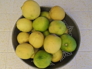 And these are the limes that we have left AFTER taking some down to Scott and family. Time to squeeze and freeze.