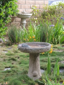 In addition to the pond, we have a bird bath. The one is back is a used fountain dropped off by our tree guy. Someone was throwing it out because it no longer holds water. I plan to fix it if I can.