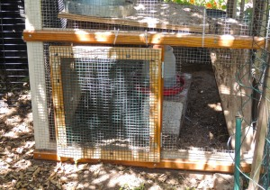 A new door that I built and installed on the chicken coop.