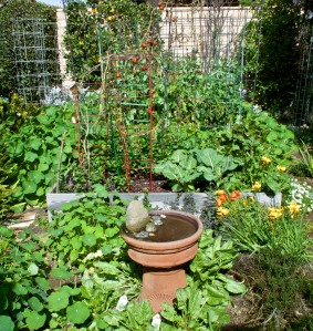 A view of my backyard vegetable garden in raised beds (behind the herb garden and bird bath)