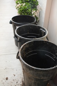 Here are three containers in a row, positioned to catch the maximum amount of dripping from the eaves. There are two other barrels farther down the row of jade plants. Note that I didn't waste water to wash off the containers, which are stored next to the chicken coop during the dry season.