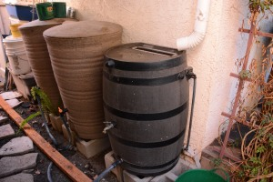 This is where the bulk of our rainwater collection occurs. We have one rain barrel set up under a gutter. The other two barrels are linked in series to it through tubing. These 50 gallon barrels are 2/3 full! From just one storm that produced only a quarter of an inch of rain. Amazing.
