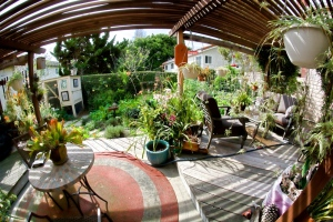 Love what the fisheye does to the view out our patio door. Chicken coop to the left, veggie garden to the right.