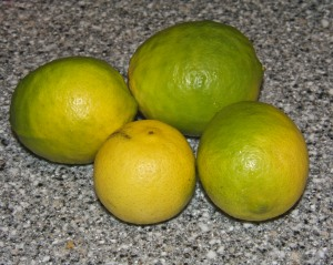 Limes keep falling from the tree, one or two or four at a time.