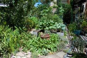 Here is half our backyard, looking north past the herb garden. This is where I grow most of my vegetables.