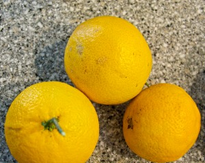 This is my entire harvest of Valencia oranges: three of them. One went into a Moroccan Orange Cake.