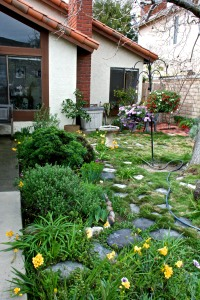 The flower border by the front walkway has freesias, cobbity daisies, petunias, and freeway daises in bloom. It also grows marjoram and oregano. Edible landscaping!