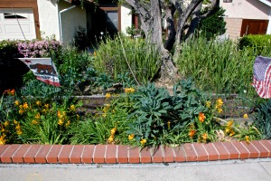 This is a dead-on straight shot of the front beds from the street. Kale, kale, kale.