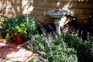 This is a nice meditation garden for hummingbirds.