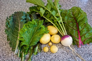 I haven't been good about photographing my harvests, but here is one day's harvest of mustard greens, kale, gold potatoes, a turnip, and chard. All of this went into a wonderful beef stew, along with the last jar of my home-canned tomato soup that was lousy as soup but great as a stew base.