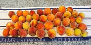 Our first picking of ripe peaches this year.