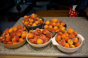 This was the second picking, over 18 lbs of peaches. I ran out of bowls to put them in.