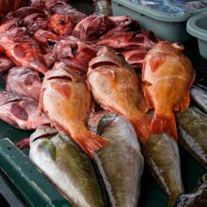 Lots of fish still left