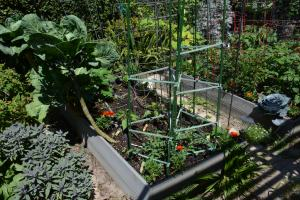 I like watching my veggies grow. This bed is the most recently planted one. I have nets over all three beds to keep the birds out. They had been eating my lettuce, peas, green beans, and even the cucumber leaves.