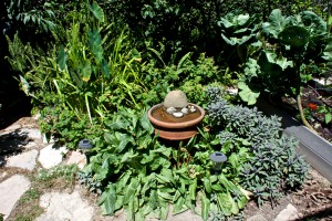 The herb garden with bird bath in the center has sage and sorrel in it at present. I feed the sorrel to the chickens.