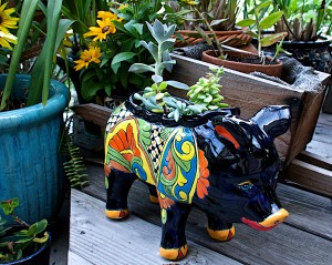 I love this little piggie planter from Mexico. I call him El Señor Puerco. Now how many people name their planters?