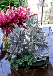 This is one of my newest planters of succulents, with a red bromeliad in the background.